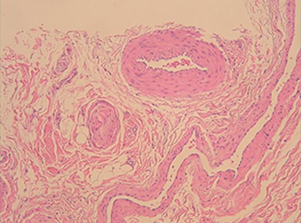 病理組織学的検査、細胞診検査、細菌検査1